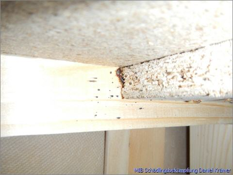 Bed bug traces on the wooden frame
